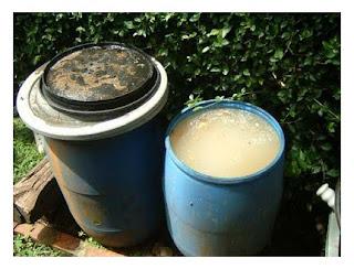 Cara Membuat Pupuk Organik Cair Dari Kotoran Ternak