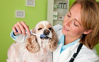 Dental care for your dog!