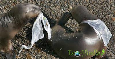 fauna y plástico