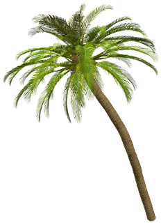 palmera,png,vegetacion,playa,cutaut,arbol,sin fondo.
