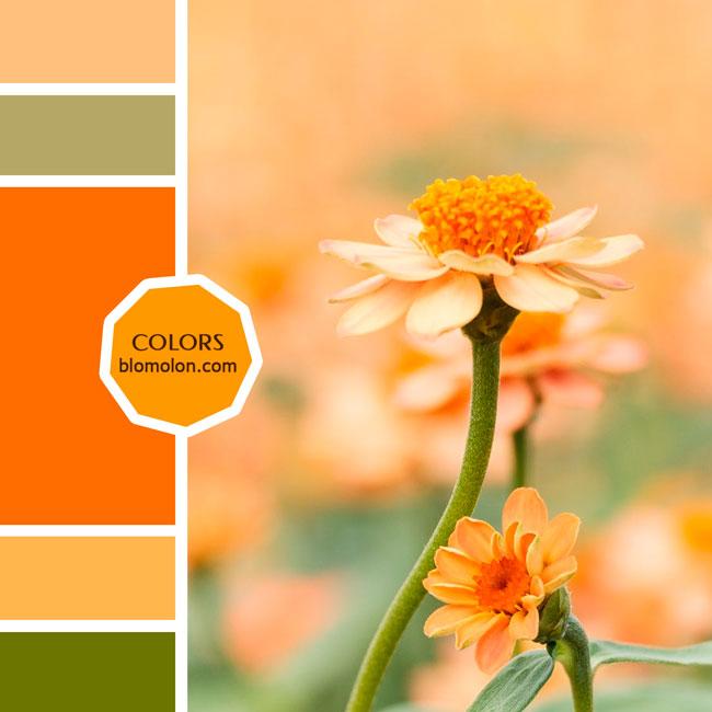 variedad_en_color_moodboard_82