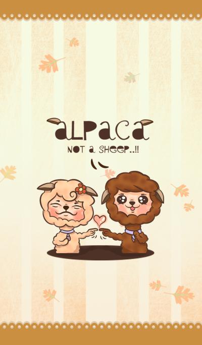alpaca not a sheep