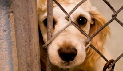 25 casos de maus-tratos a animais são registrados por dia no Estado de São Paulo