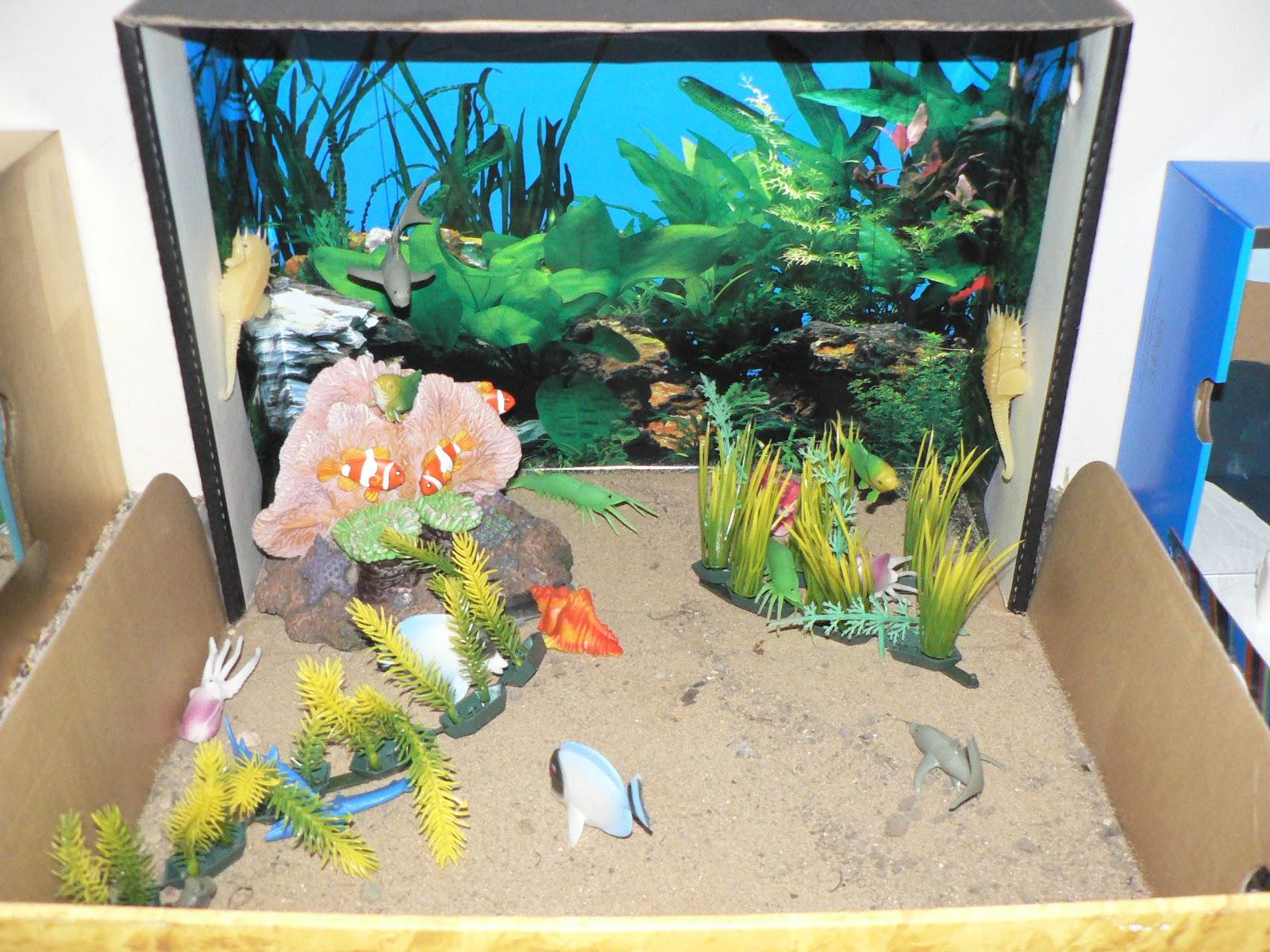 Schooling At Home Happenings Habitat Dioramas