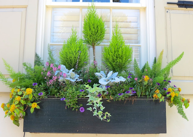 charleston sc window boxes ideas arranging centerpiece tall plant