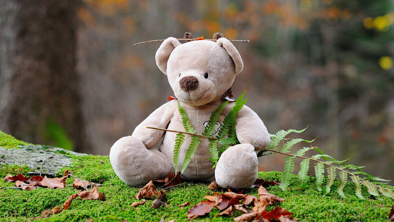 Teddy Bear, the cute animal toy in forest HD
