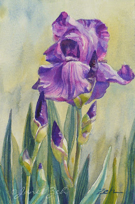 Purple Iris watercolor painting