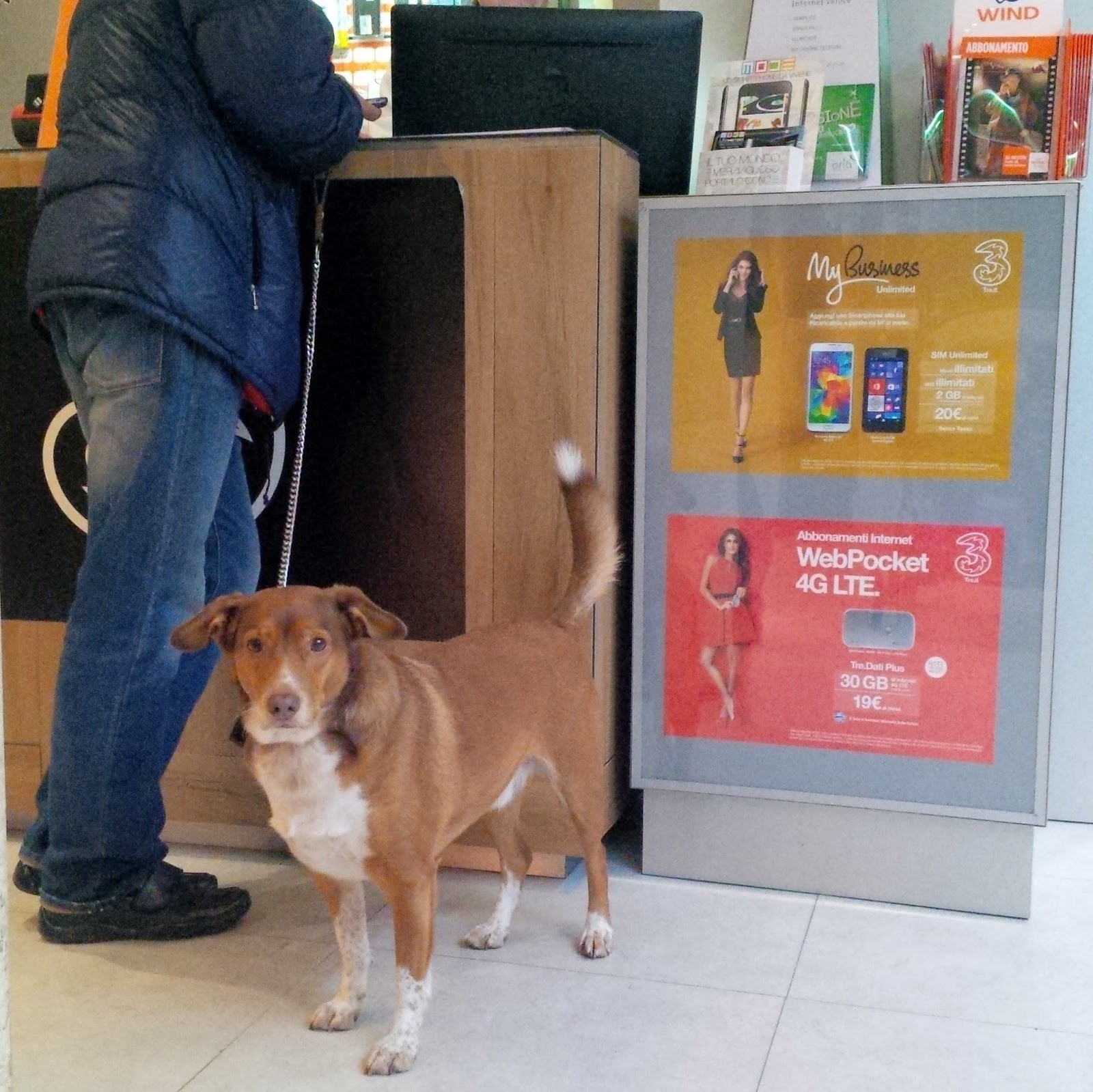 A dog with his master in a local phone shop