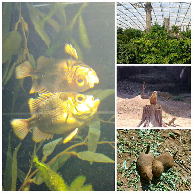 Aquarium at the Leipziger Zoo