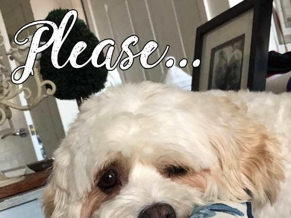 Please Vote for Happy Loves Rosie in the Amara Interior Blog Awards 2018