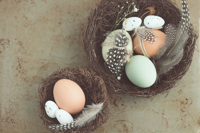 natural birds eggs photo credit :: https://unsplash.com/@studioktr
