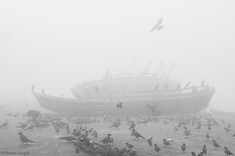 Foggy Morning and lots of Birds with a Boat at bank of Yamuna River, Vrindavan.