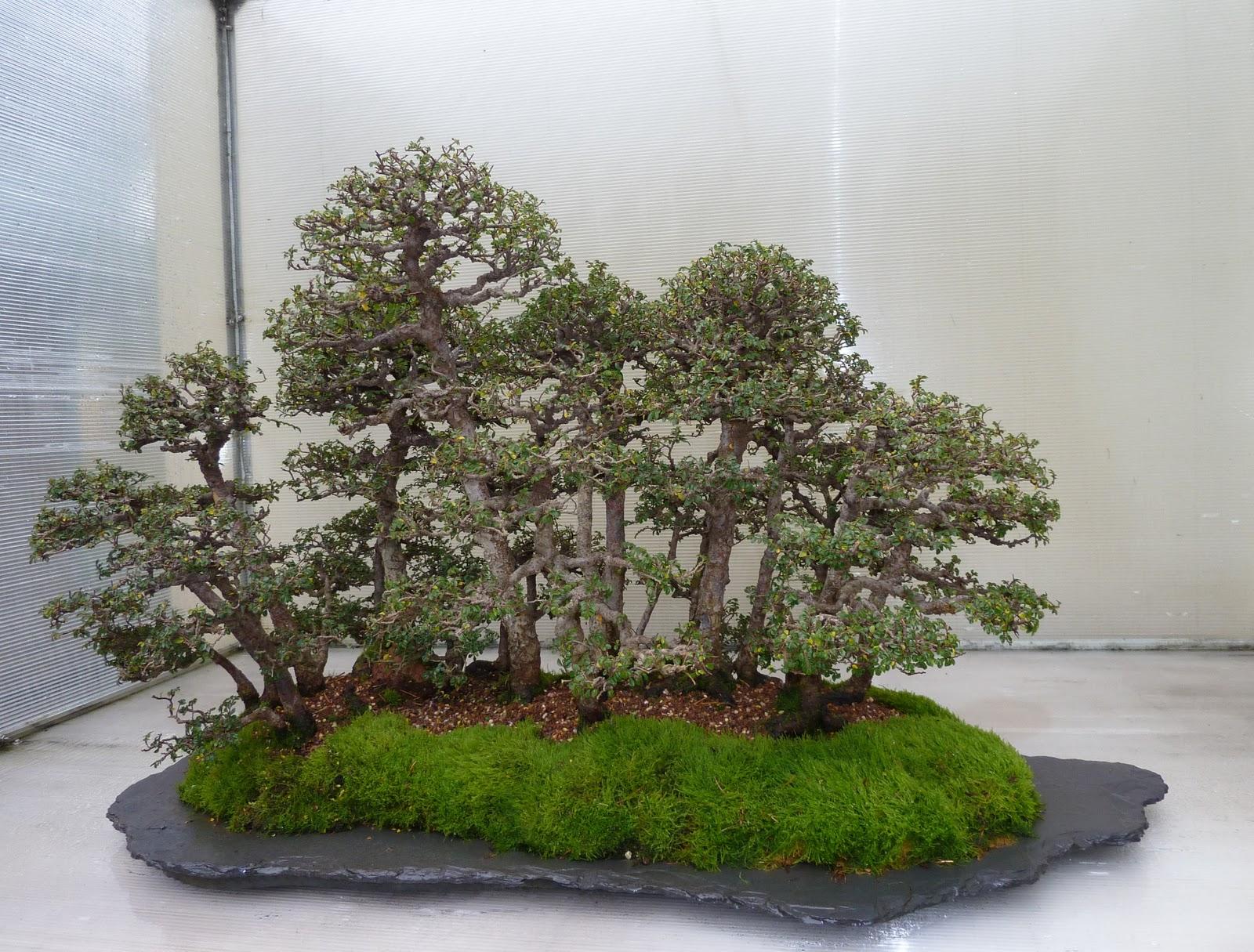 Bonsai Tree 15 Modern Weyerhaeuser Bonsai Inspirations