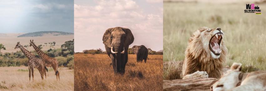 I parchi nazionali in Tanzania