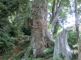 日枝神社イチイカシ