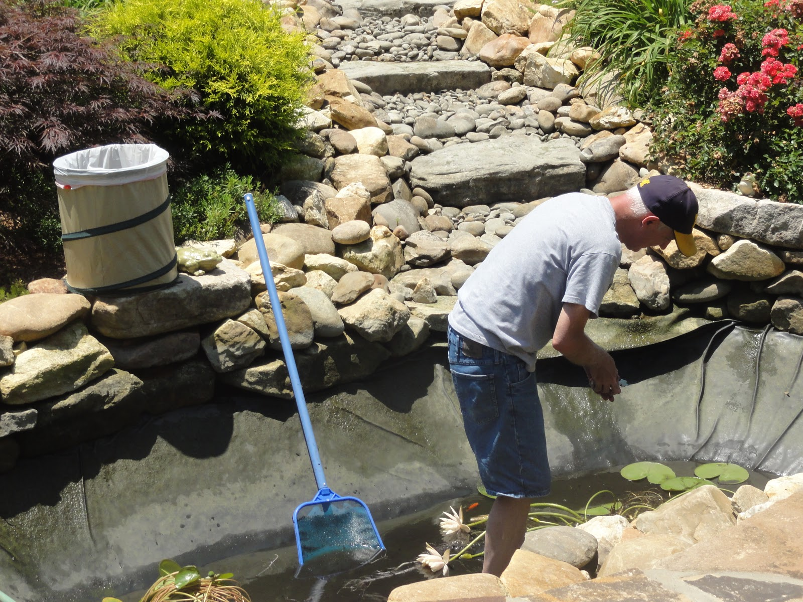 Happy home pond maintenance and water gardening for Pond maintenance