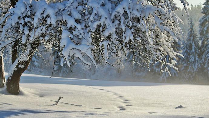 Wallpaper: White. Landscape. Nature. Winter. Snow