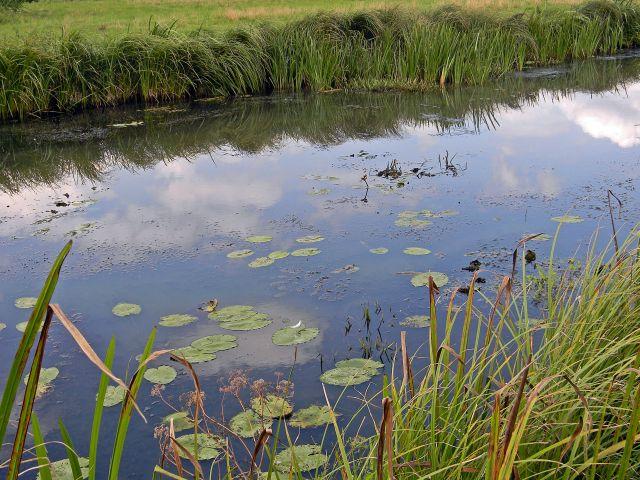 Babimost i okolice, rzeki, flora rzek