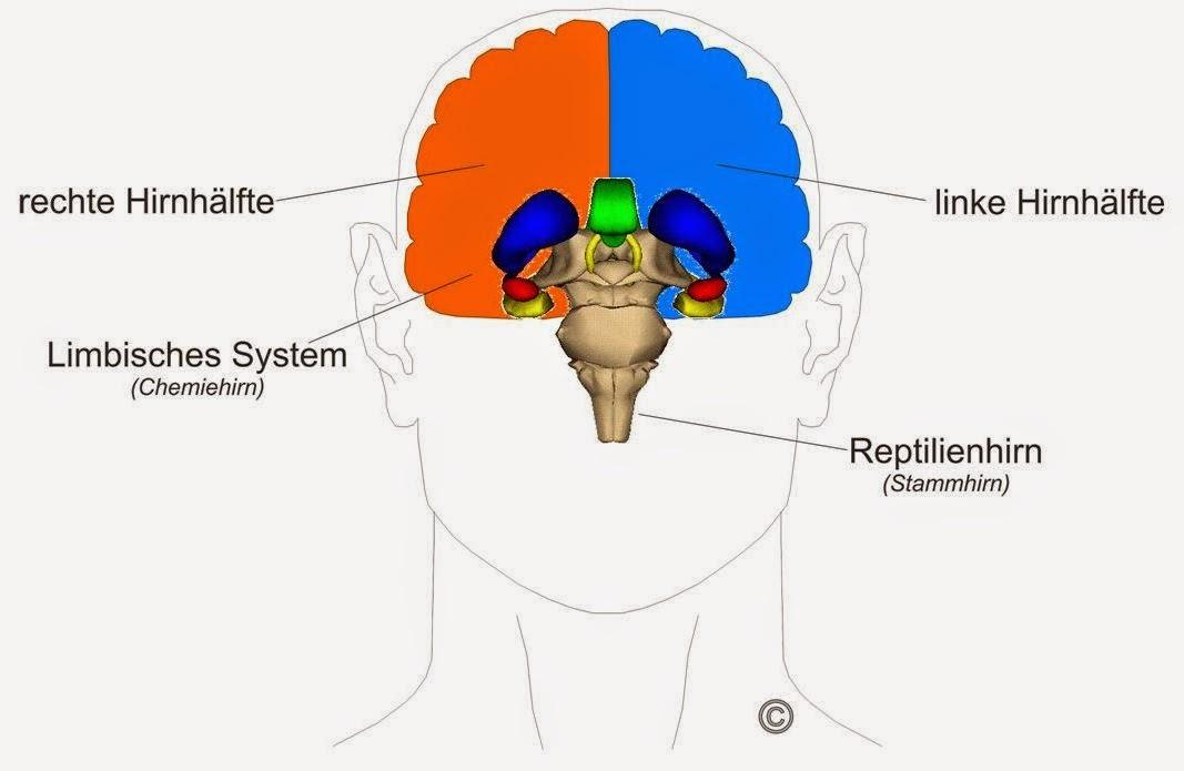 Menschen mit dominanter linker Hirnhälfte sind leichter zu hypnotisieren.