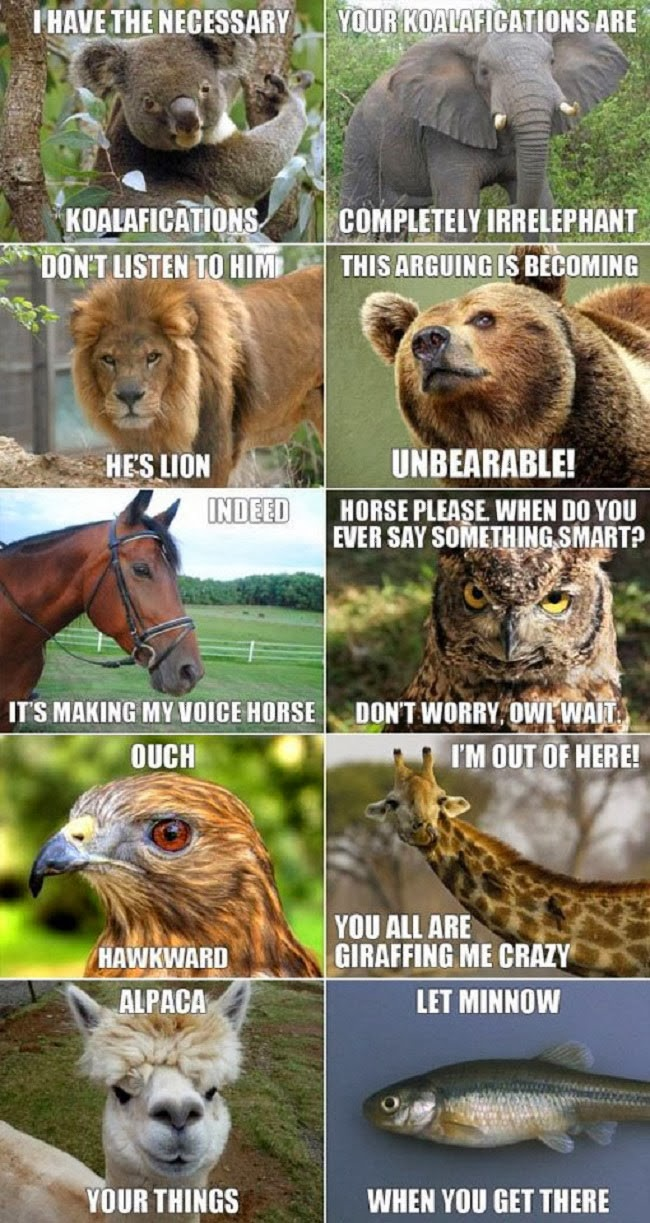 Funny Sealy Animal Pun Memes Photos - Koala, Lion, Bear, Horse, Hawk, Giraffe, ALpaca, Minnow