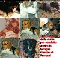 http://famigliagandini.blogspot.it/2014/10/brenda-e-morta-in-questo-momento-grazie.html