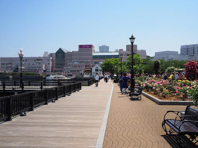 横須賀 ヴェルニー公園 バラ園