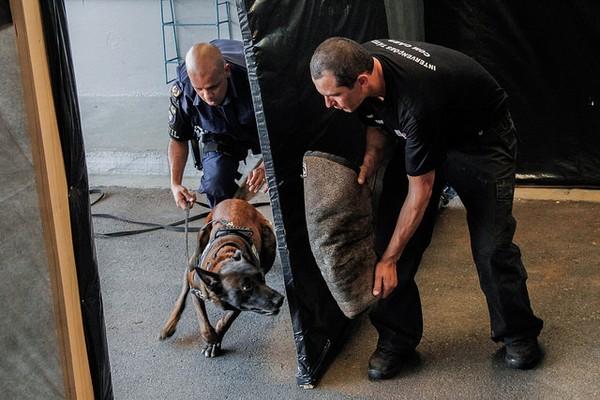 Itapevi: Canil da Guarda recebe treinamento tático para ação em grandes eventos