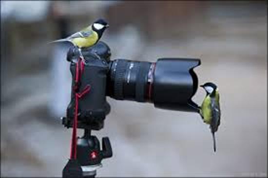 Olha o passarinho 1
