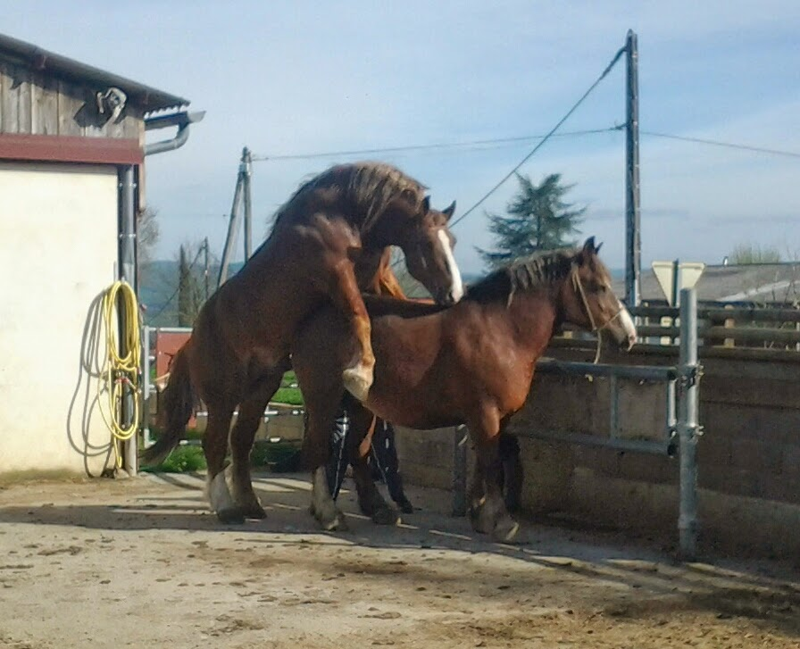 Travelling And Working With Horses Post 29 Breton Horses