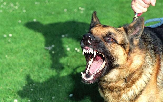 Bị chó cắn hay tấn công phải làm sao?