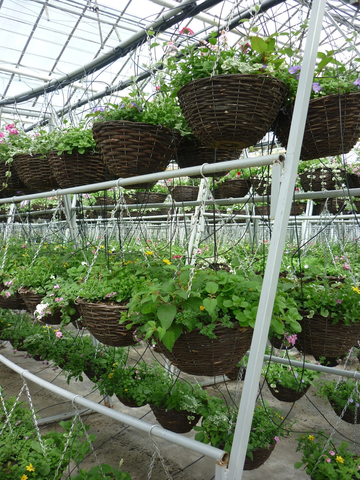 Occupying A Site Of More Than 30 Acres (1,400,000 Square Feet!), This  Phenomenal Expanse Of Glasshouses   Which Madam Arcati And I Visited Today    Is A ...