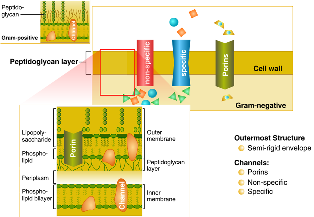 Bacterial Cell Diagram And Functions 2006 Cobalt Alternator Wiring Cellular Structure Of Bacteria Zero Infections