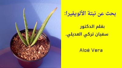 نبات الالوفيرا -  سفيان تركي العديلي
