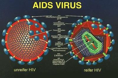 Kelainan dan Penyakit pada Organ / Alat Reproduksi Manusia beserta Pencegahan dan Penanggulangannya
