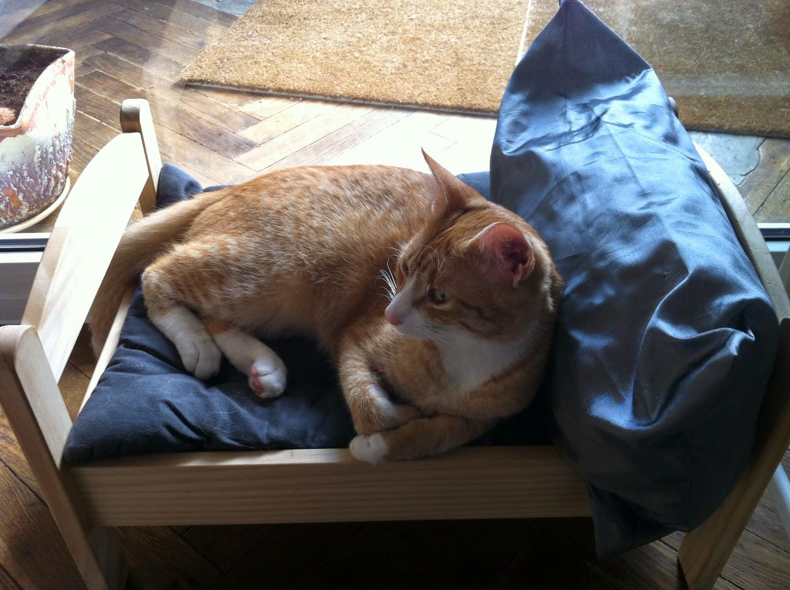 an orange cat sleeping in a cat bed