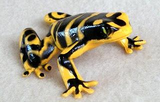 Altın Kurbağa
