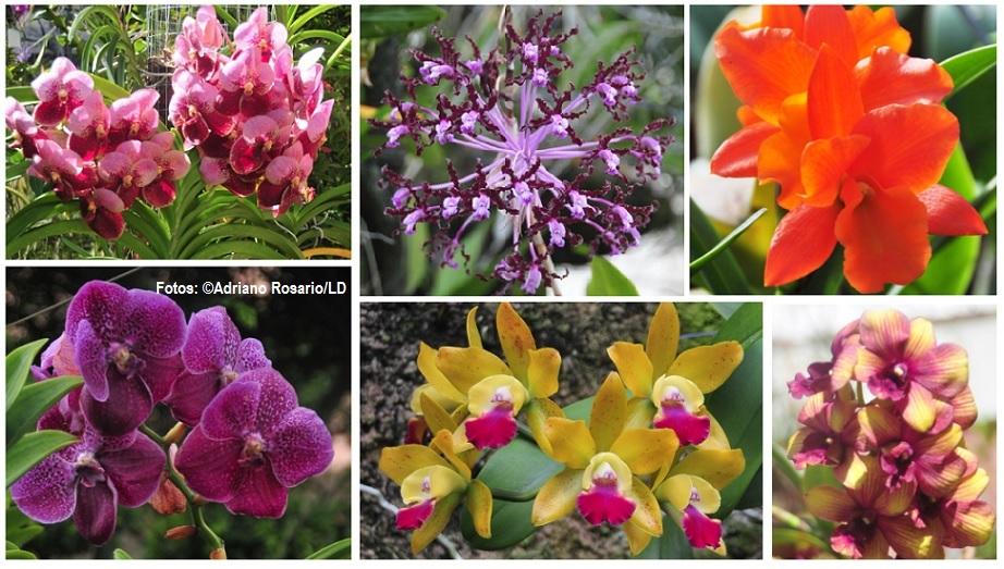 Orquideas dominicanas