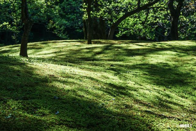 木漏れ日射すコケの絨毯~旧古河庭園
