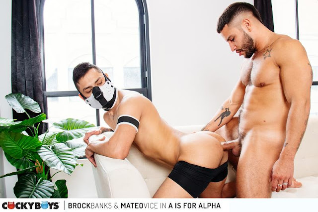 A is for Alpha: Brock Banks & Mateo Vice