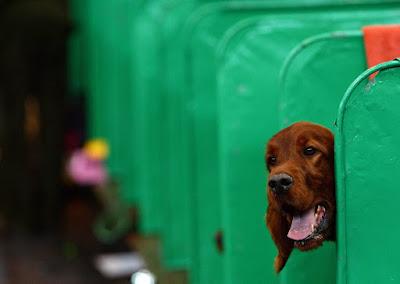 kutyaugatás, állatvilág, kutya, tanulmány, Interaction Studies, ELTE Etológiai Tanszéke, zajszennyezés