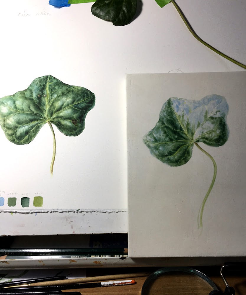 picture of ivy watercolour