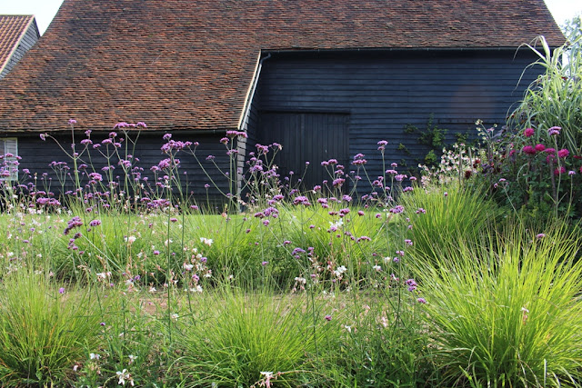 Listed barns screened by wispy Verbena bonariensis