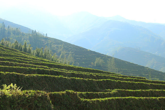 Terraced rice fields Sapa, Vietnam - travel blog