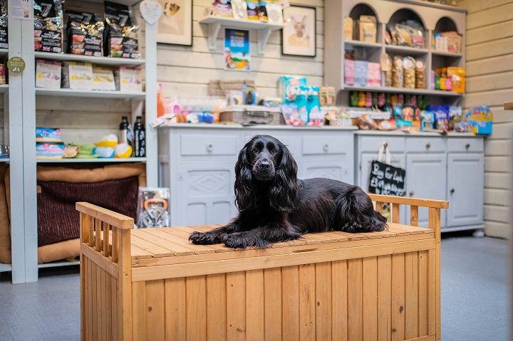 Dog Friendly Guide to Cornwall