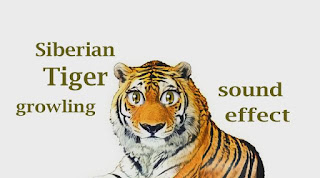How Tiger Sounds