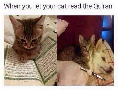 When you let your cat read the Qu'ran