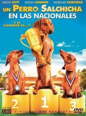 Un Perro Salchicha en las Nacionales en Español Latino