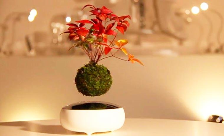 liebe das ganze weil das ganze liebe ist schwebende bonsai b ume. Black Bedroom Furniture Sets. Home Design Ideas