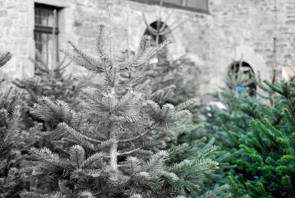 www.zauberhaftwohnen.com / Gedanken zu Weihnachten / Burg Kemnade / Ruhrtal bei Witten / Kemnader See