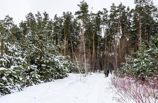 зимовий ліс на платформі Будинок відпочинку